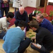 Churchgoers planting strawberries in the church hall